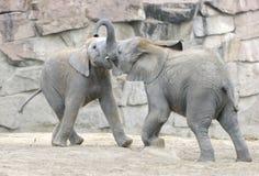 El jugar de los elefantes del bebé Imagen de archivo libre de regalías