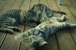 el jugar de los gatitos Foto de archivo libre de regalías