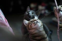 el jugar de los gatos Foto de archivo libre de regalías