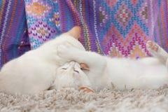 el jugar de los gatos Fotos de archivo libres de regalías