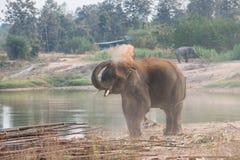 El jugar del elefante fotografía de archivo libre de regalías