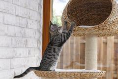 El jugar del gatito Fotos de archivo