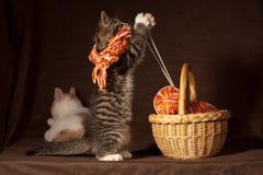 El jugar del gatito Fotografía de archivo libre de regalías