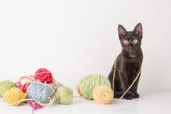 El jugar del gatito imagen de archivo libre de regalías