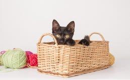 El jugar del gatito imágenes de archivo libres de regalías