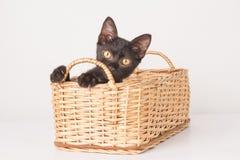 El jugar del gatito imagenes de archivo