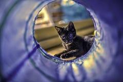 El jugar del gatito foto de archivo libre de regalías