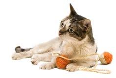 El jugar del gato Fotografía de archivo libre de regalías
