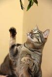 El jugar del gato imagenes de archivo