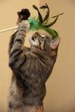 El jugar del gato Fotos de archivo