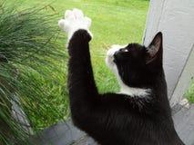 El jugar del gato Imagen de archivo libre de regalías