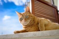 El jugar del gato Fotografía de archivo