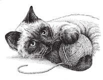El jugar del gato siamés Fotos de archivo