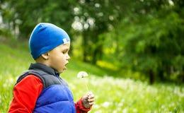 El jugar del niño pequeño 4 - 5 años al aire libre en fondo Muchacho joven que se sienta en el diente de león que sopla del campo Imagenes de archivo