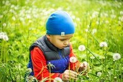 El jugar del niño pequeño 4 - 5 años al aire libre en fondo Muchacho joven que se sienta en el diente de león que sopla del campo Imagen de archivo