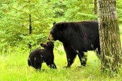 El jugar del oso negro y del bebé. Fotos de archivo