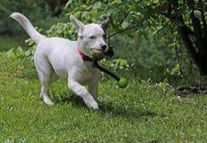 El jugar del perrito imagen de archivo libre de regalías