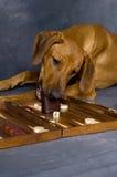 El jugar del perro Imagen de archivo