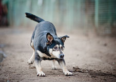 El jugar divertido del perro Imagen de archivo