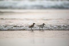 El jugar en la playa Fotografía de archivo