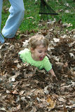 El jugar en las hojas Fotografía de archivo libre de regalías