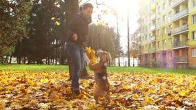 El jugar femenino joven con el perro de perrito del beagle en parque otoñal almacen de video