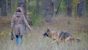 El jugar femenino joven con su animal doméstico - pastor alemán en bosque del otoño Fotos de archivo