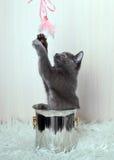 El jugar gris del gatito Imágenes de archivo libres de regalías