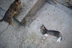 El jugar lindo del gatito Fotos de archivo