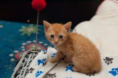 El jugar rojo del gatito Imagenes de archivo