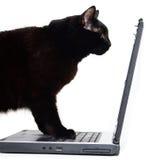 El Kat es localización delante de una computadora portátil Imágenes de archivo libres de regalías