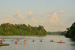 El Kayaking en el depósito Singapur de MacRitchie Fotos de archivo libres de regalías