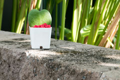 El kerrii de Hoya deja el primer Foco selectivo (profundidad baja de f Fotos de archivo