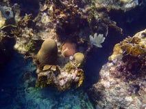 El korala plaża Fotografia Stock