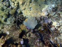 El korala plaża Obrazy Stock