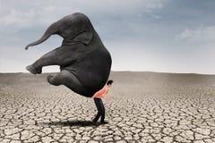 El líder empresarial lleva el elefante en la tierra seca Imagen de archivo libre de regalías