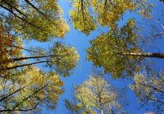 El límite del cielo imágenes de archivo libres de regalías