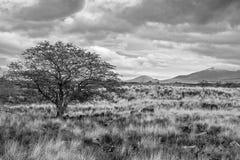 El lado de Kona de la isla grande Imagenes de archivo