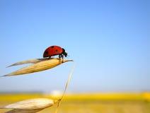 El Ladybug se prepara al vuelo imagen de archivo