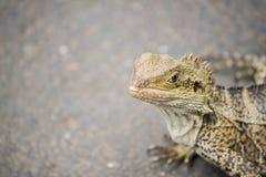 El lagarto Fotografía de archivo libre de regalías