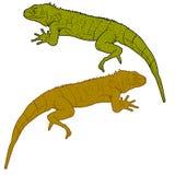 El lagarto es silueta del goanna en un fondo blanco Ilustración del vector Foto de archivo libre de regalías