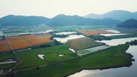 El lago Biwako resuelve las tierras de labrantío que crecen la antena del arroz almacen de metraje de vídeo