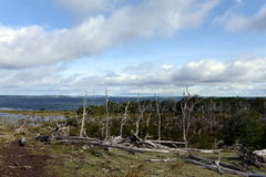 El Lago Blanco en la isla de Tierra del Fuego Fotos de archivo