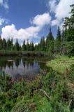 El lago con los árboles caidos Fotos de archivo libres de regalías