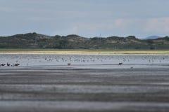 El lago de sal en el Gobi Fotos de archivo