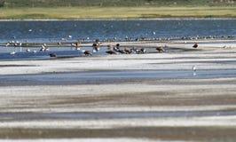 El lago de sal en el Gobi Imagen de archivo libre de regalías