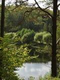 El lago del bosque imagen de archivo libre de regalías