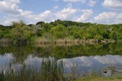 El lago del parque Foto de archivo