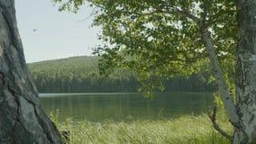 El lago en el bosque en el primero plano allí es ramas de árboles Rama de árbol en el lago del primero plano almacen de metraje de vídeo