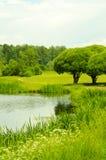 El lago en el parque Fotos de archivo libres de regalías